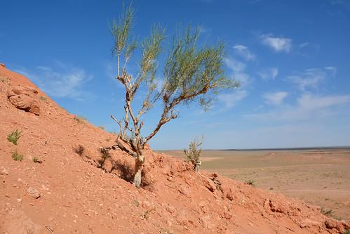 mongolia gobi desierto desert