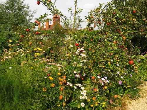 Capel Manor Gardens   by Laura Nolte
