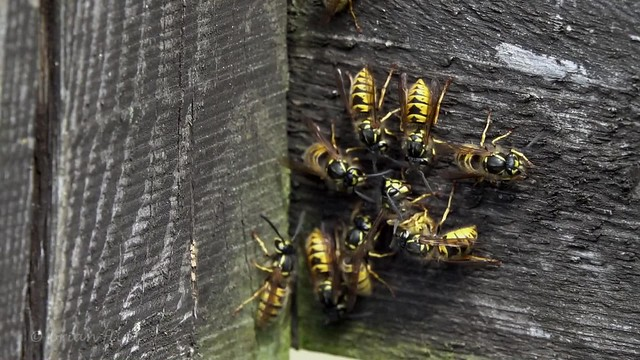 wasps in motion