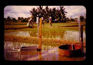 スリランカ・ドライゾーンにおける水田用水量