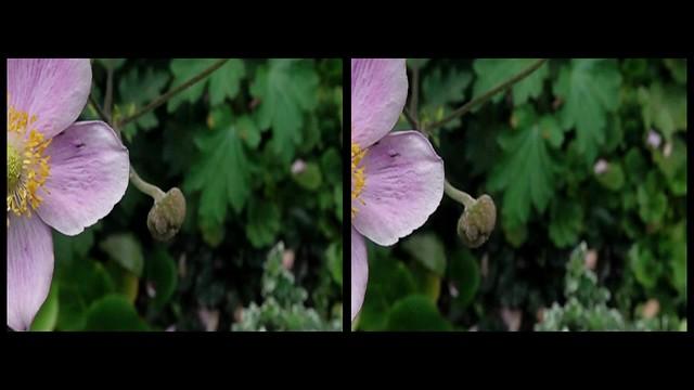 Pink Flower 3d crossview
