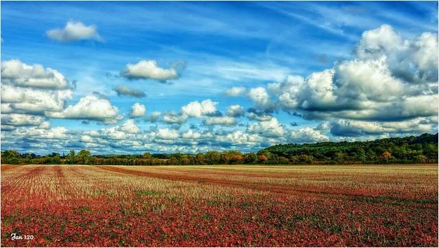 Autumn on a battlefield