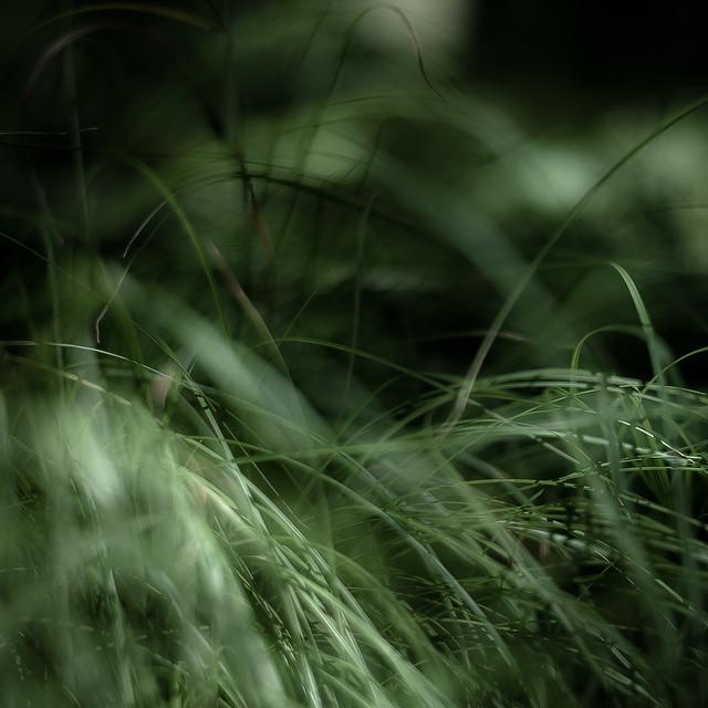 Forest Grass 014