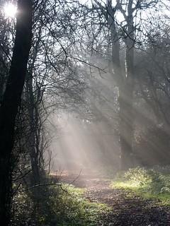 Sunlight on Coulsdon Common