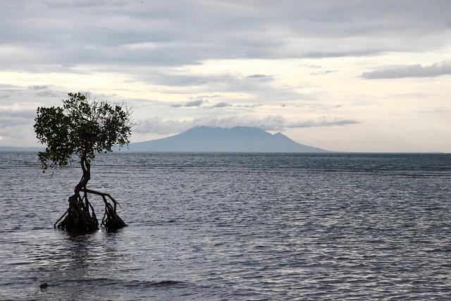 L'arbre qui poussait dans la mer