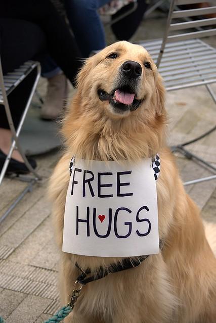 A Popular Dog