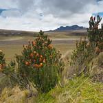 Sa, 13.06.15 - 12:42 - Parque Nacional Cotopaxi