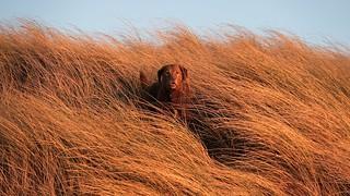 Dune Dancer 2 | by alisondunlop