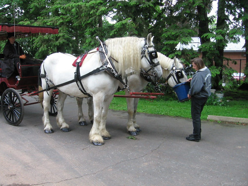 White Horses, Red Carriage, Blue Bucket