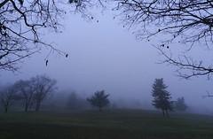 Foggy Christmas Day