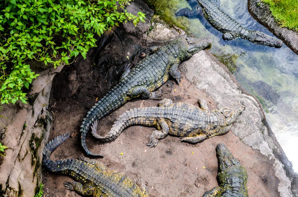 Crocs darker WAT AK