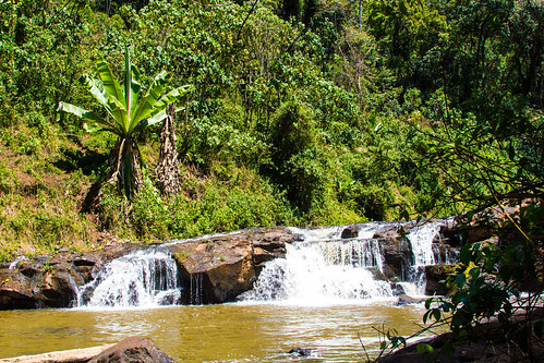 waterresources forests forestedwatersheds kenya aquaticenvironment rainforests water watershedprotection tropicalforests watershedmanagement watermanagement mau trees bomet ke