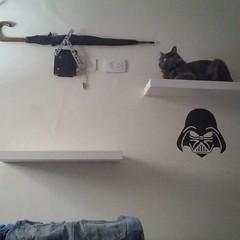 #DonCato el gato obscuro de la Juerza