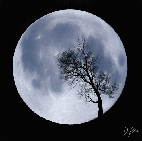 Moon Tree | by DomWphoto