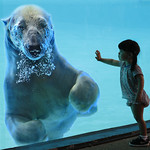 Polar Bear encounter 2