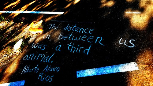Chalking from Why Animals Stay Away by Alberto Alvaro Ríos along the Santa Cruz River.  (Urban Poetry Pollinators)