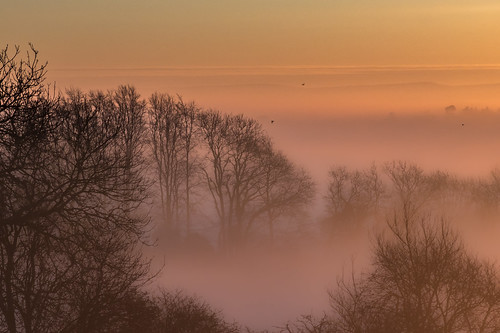 fog landscape surrey birds morning sunrise