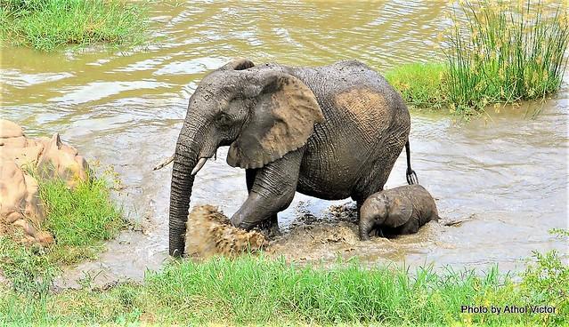 Babies bath day......Hluhluwe National Park