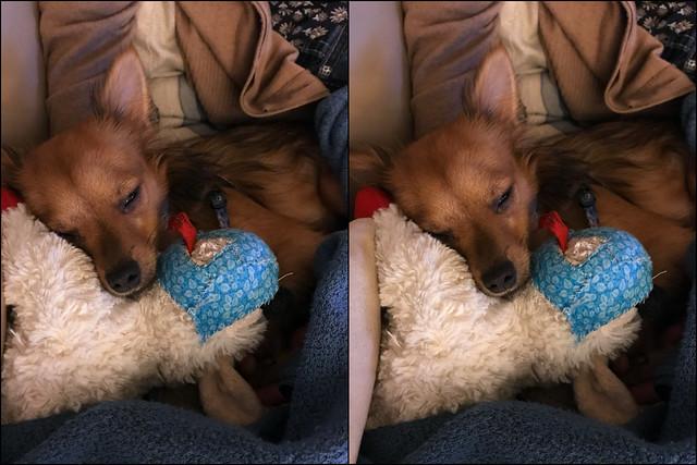 Sleepy with Dolly