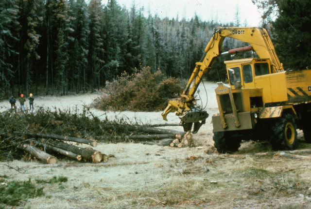 1975. Drott feller buncher salvage logging lodgepole pine infested with mountain pine beetle.