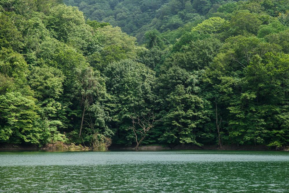 十二湖 Japan Aomori Twelvelakes 日本 青森 白神山地 十二湖