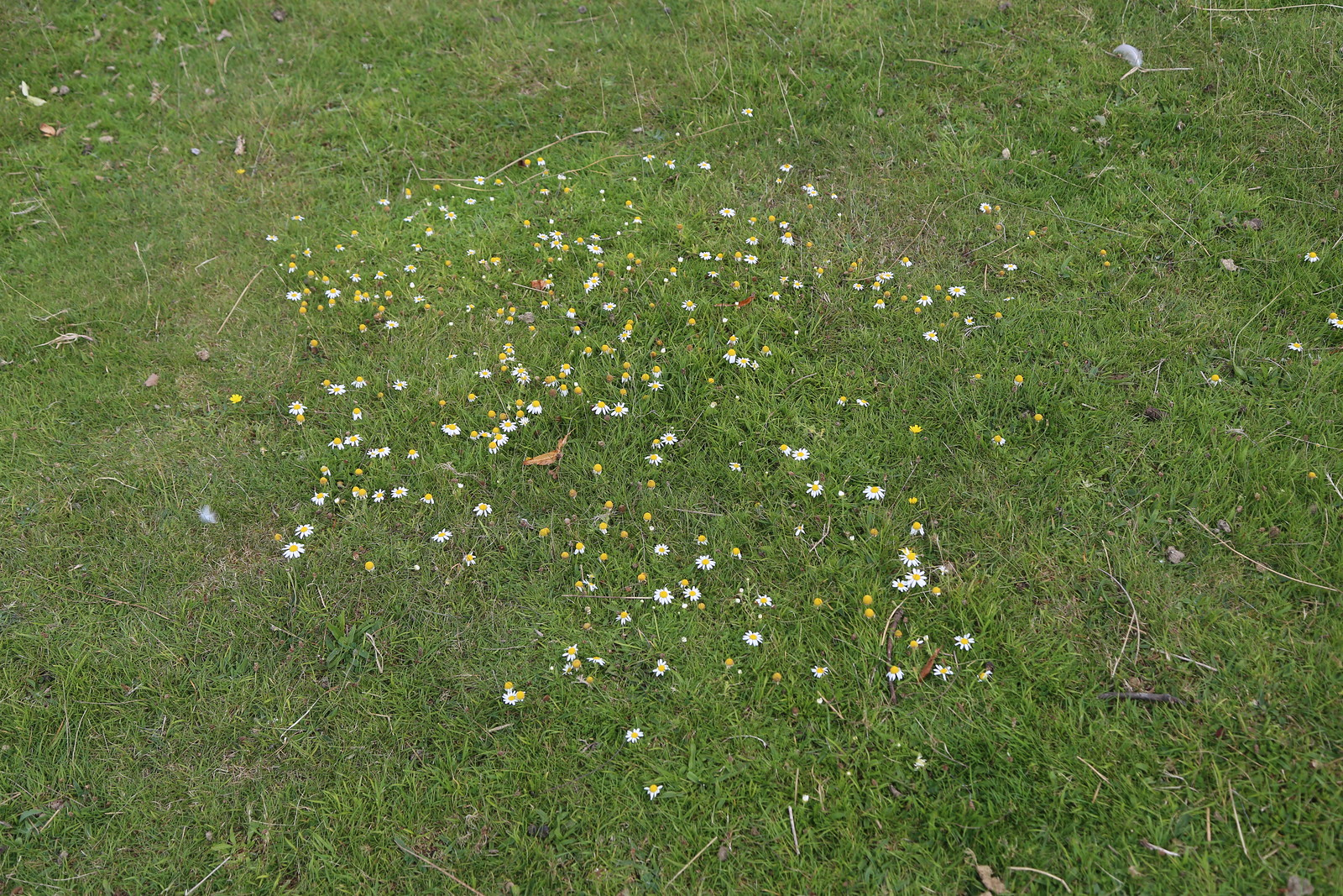 Camomile Lawn - Petworth House