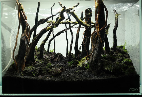 hardscape planted day 1   by nigel_kh
