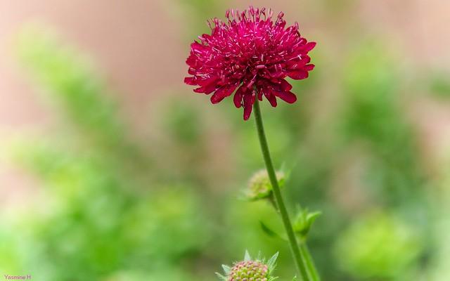 Flora - 3662