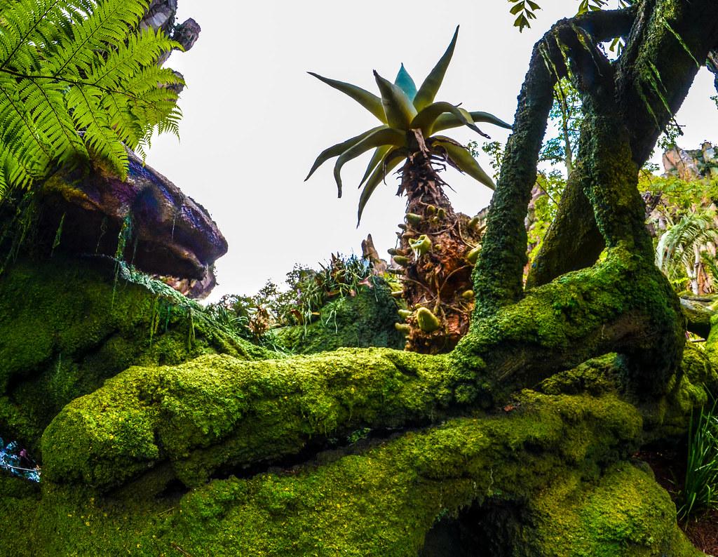 Pandora Palm tree AK