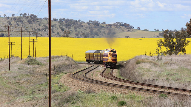 4204 running the CANOLA