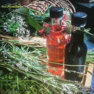 Harvesting herbs for our tea, bbq rubs, & vinegar offerings at the store. | by Karen @ Wall Flower Studio