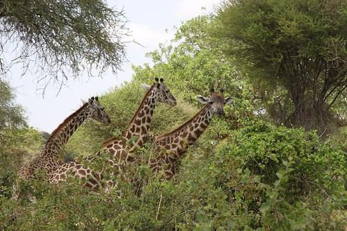 Tarangire National Park, Tanzania | by AndreyFilippov.com