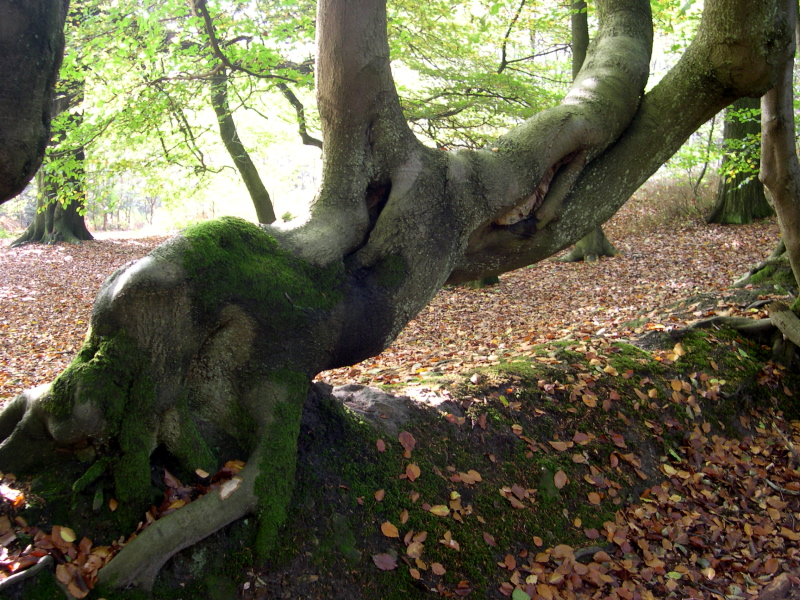 In Leith Hill woods 1