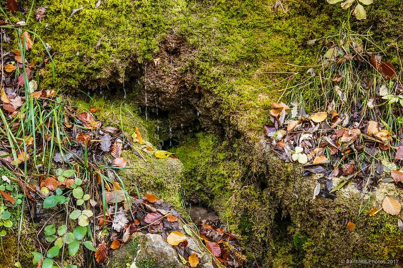 La tierra rezuma agua