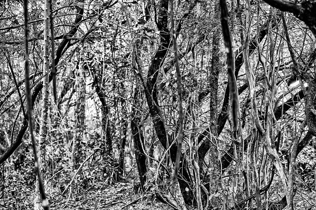 Tangled Forest #2