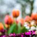 Fleur plein d'espoir