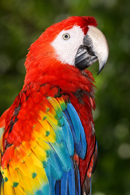 Macaw[Explored]