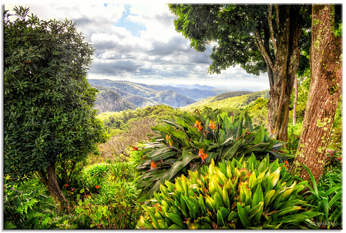 mounttamborine queensland view garden mountains vista birdofparadise tropical fotografdude nikon d610