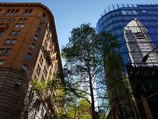 Sydney CBD Old and new Architecture plus Trees - Samsung Galaxy Note 8 photo example.jpg (2) | by neeravbhatt