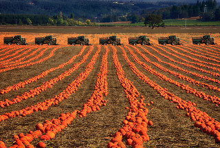 Autumn Fields | by Ian Sane