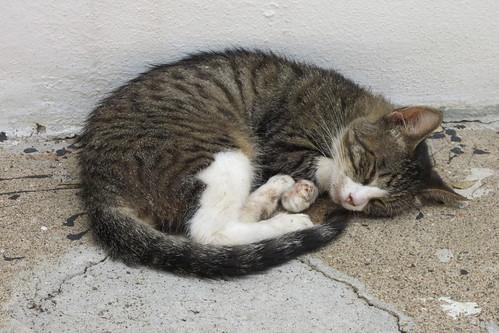 San Juan - Calle del Hospital Feral Cat