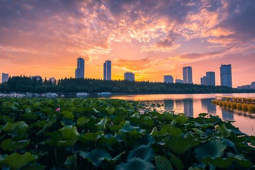 lotus flower pond water lake xuanwulake nanjing city sunset twilight dusk building architecture petal green cloud nanjingshi jiangsusheng china cn summer boat travel nikon nikond800 outdoor tamronsp1530f28