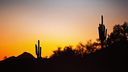 canon cactus saguaro sunset colors outdoor 70200ii landscape