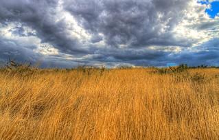 When Grass meet Clouds
