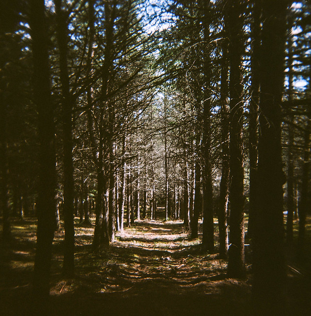 Holga dans les bois