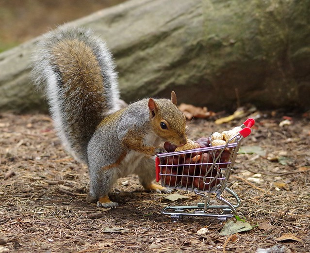 squirrel with shopping cart full of nuts. (11)
