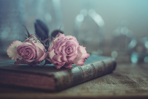 Roses and book | by Ro Cafe