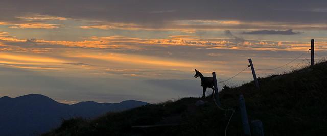 face au soleil  levant et à la plaine d Alsace
