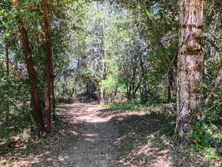 Los Trancos/Franciscan Loop Trail | by Dipika Bhattacharya
