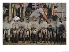 Selling sheep Kashgar